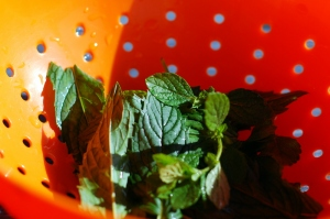 lemonbalm and mint