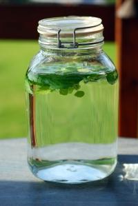 lemon-mint water steeping