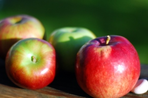 apples in the sun 1