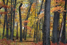 colorful woods